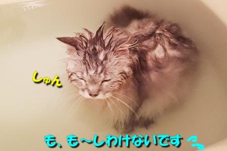 お風呂係は8