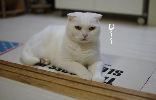 普通の猫にコピー