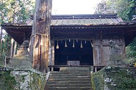 170222手力雄神社のスギ⑥