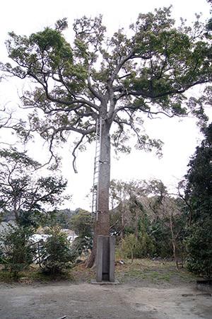 170222富浦 愛宕神社