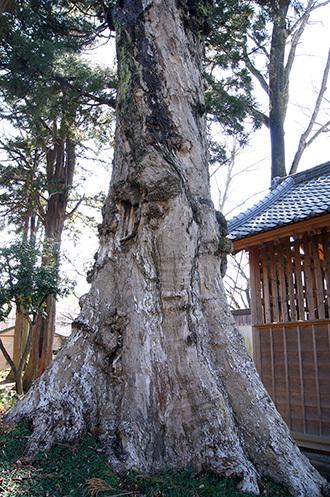 170303田村神社の椋④