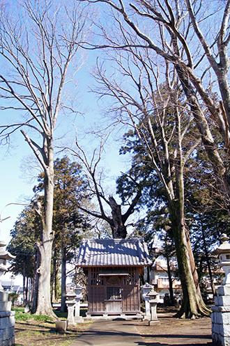 170303田村神社の椋⑥