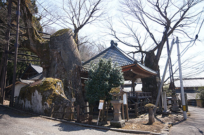 170404根古屋神社の欅⑪