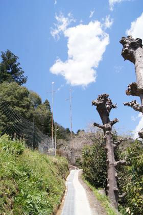 170419五柱神社大杉⑪