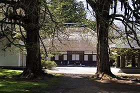 170419広徳寺のイチョウ⑧
