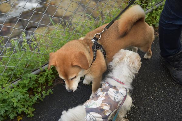 積極的な迷子犬