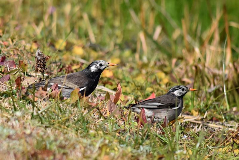 2羽の小鳥