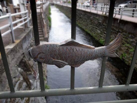 170306_01池町川の鯉