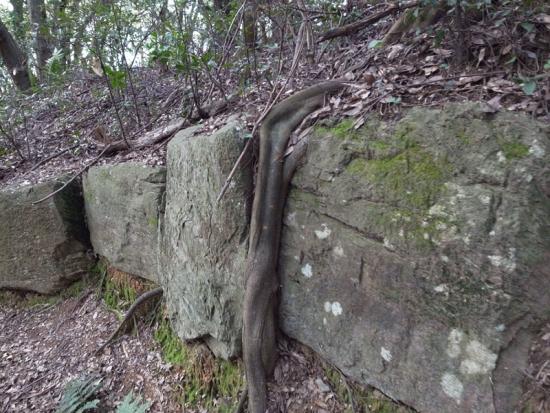 170313_03神籠石