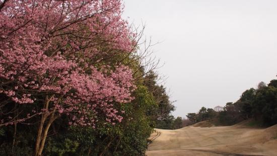 170324_01桜