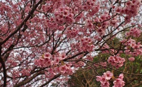170324_03桜