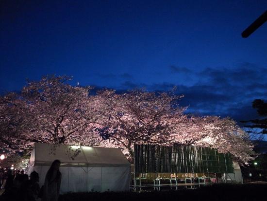 170331_14桜2016年の