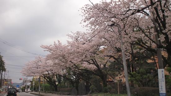170410_01南小の桜