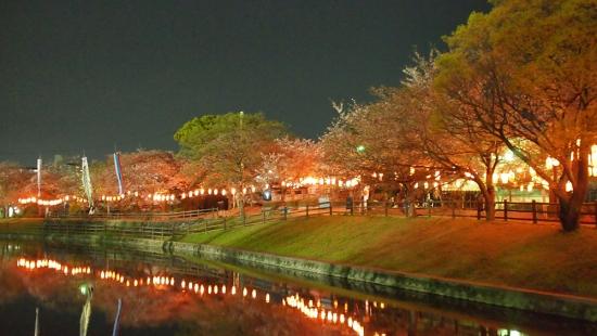 170414_14堂女木池の桜