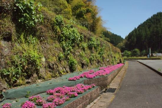 170429_12水汲み場の花