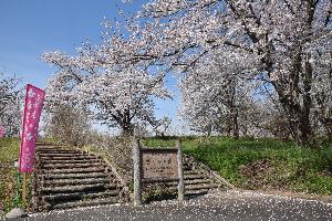 桜の丘公園