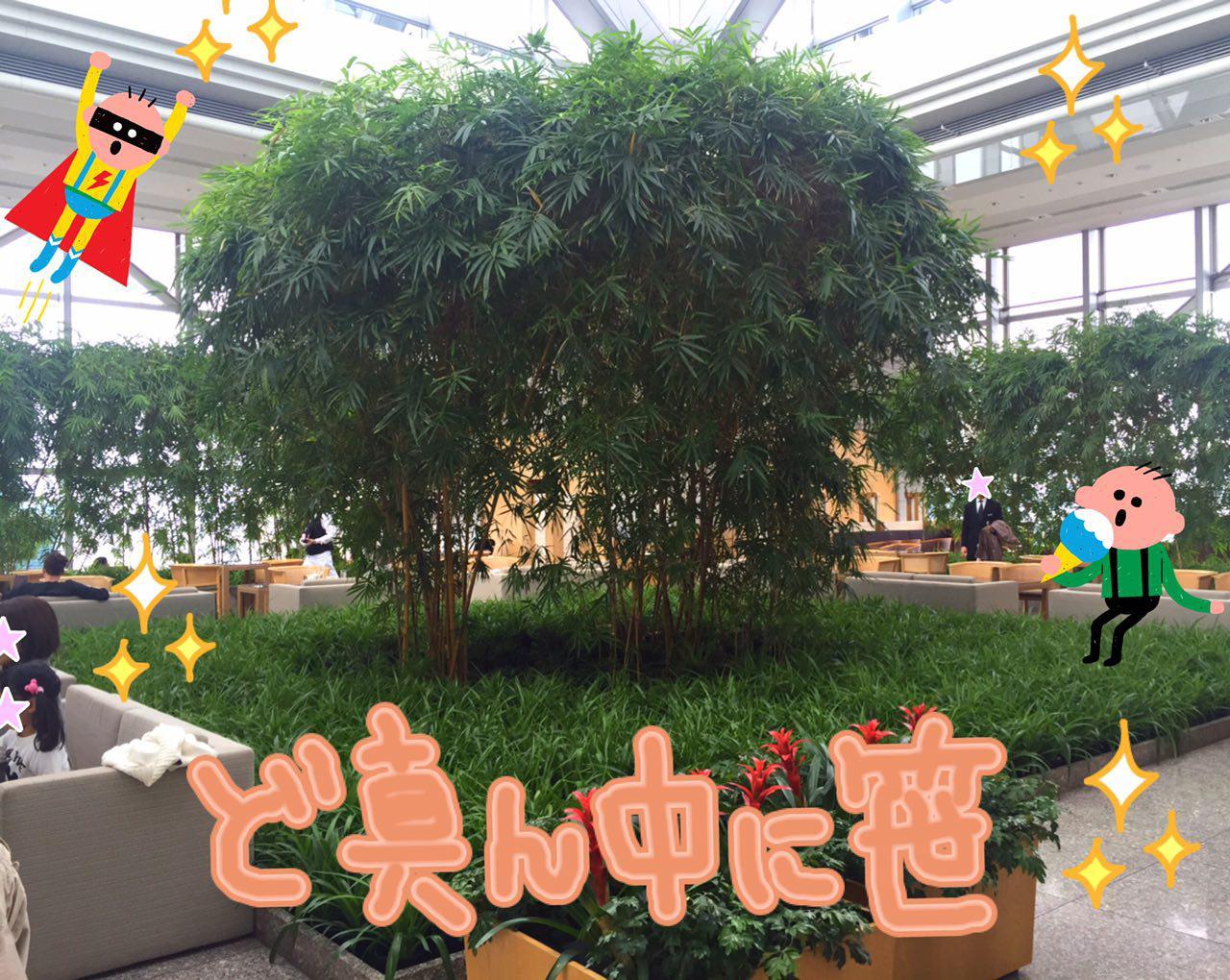 photo_2017-04-01_00-14-33.jpg