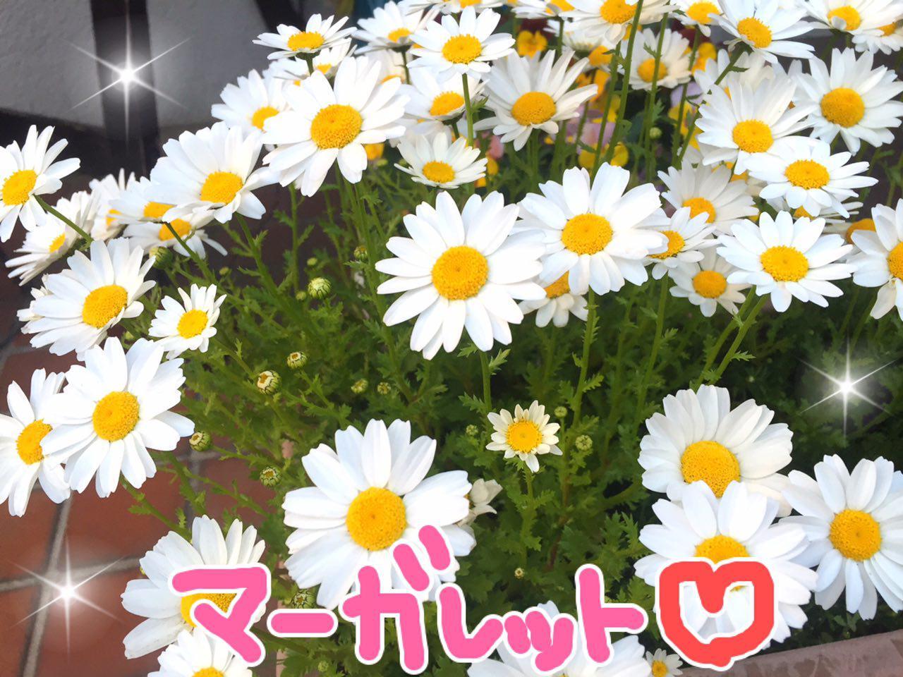 photo_2017-04-15_22-59-25.jpg