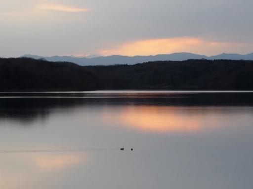 20170218・三寒四温散歩・マガモの湖05