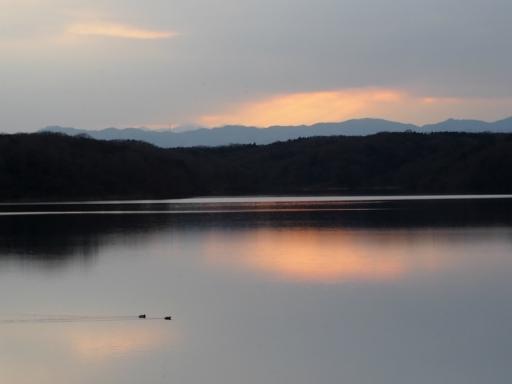 20170218・三寒四温散歩・マガモの湖04