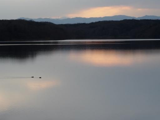 20170218・三寒四温散歩・マガモの湖03