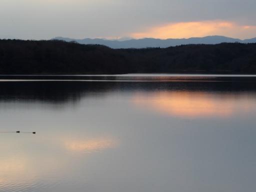20170218・三寒四温散歩・マガモの湖02