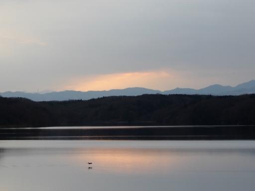20170218・三寒四温散歩・マガモの湖12