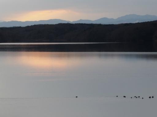 20170218・三寒四温散歩・マガモの湖11