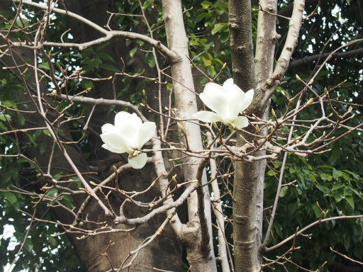 20170318・3月中旬の狭山湖07