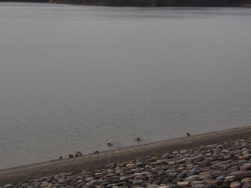 20170318・3月中旬の狭山湖22