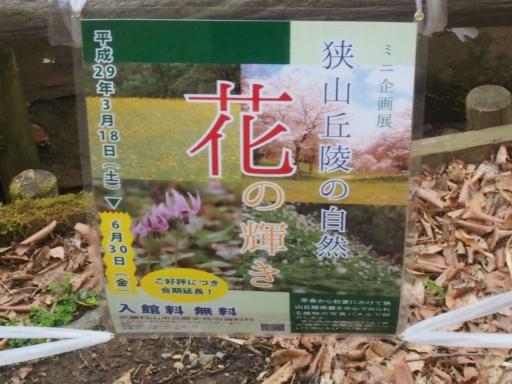 20170401・野山北公園1-16・中