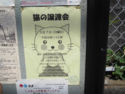 20170422・猫5