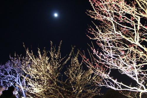 夜・梅・祭0001_3