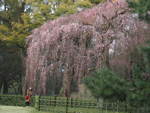 京都御苑0001_2