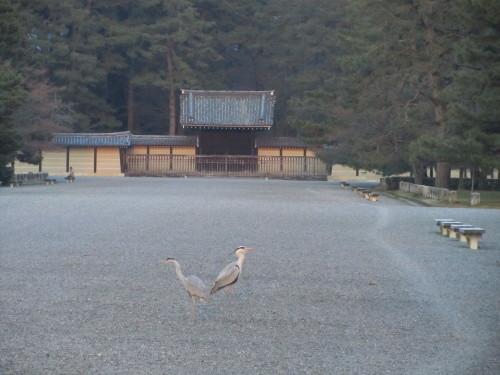 京都御苑0001_3