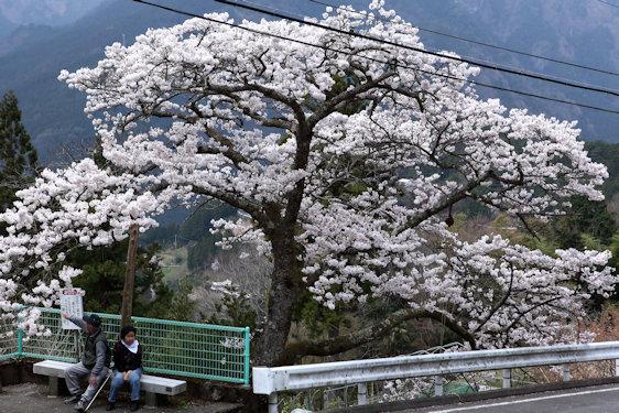 IMG_7171kawai.jpg