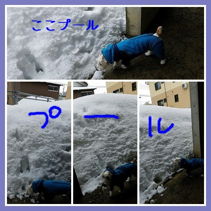 catsft7778787u.jpg