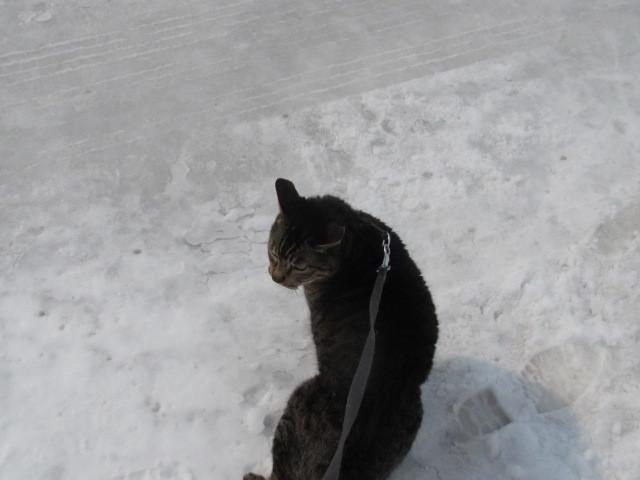 猫散歩 001