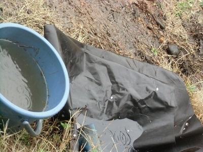 雨水が溜池にどんどん溜まる