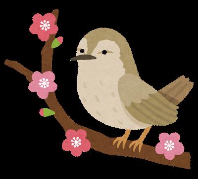 鳥、ウグイス