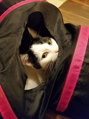 トンネル怖い21