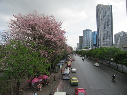 IMG_9505pink tree street