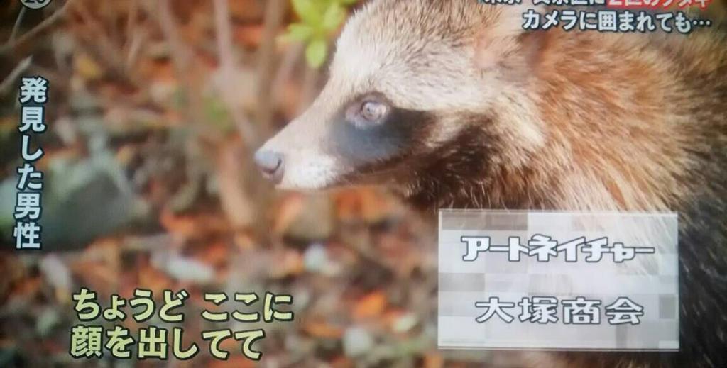 江戸っ子タヌキテレビ出演
