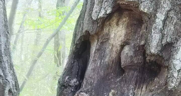 長沼公園 樹液 ウロ