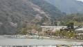 嵐山の山桜②