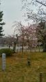 中之島公園⑦