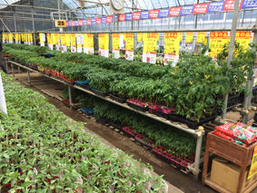 野菜苗売り場