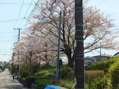 5奈良町さくら公園0415