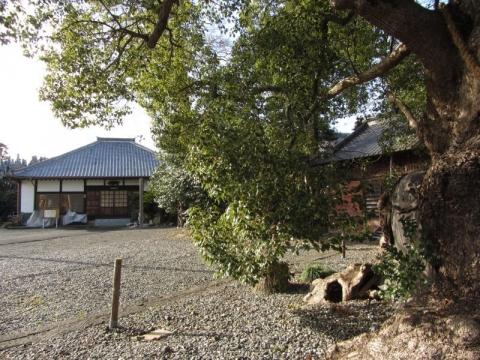 須賀神社のクス
