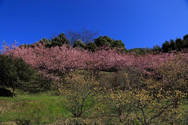 藤山健康文化公園 170219 02